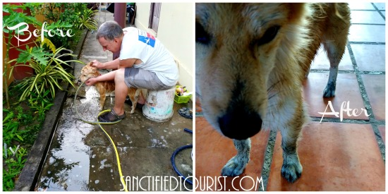 Walking in the light means repetitive hour by hour, minute by minute repentance. Our little Cambodian dog inspired this post with his bath shenanigans.